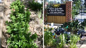 Community-Kitchen-Garden-at-Rouse-Hill-Town-Centre