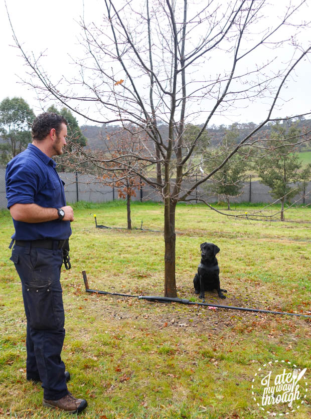dog; truffle; farm; canberra