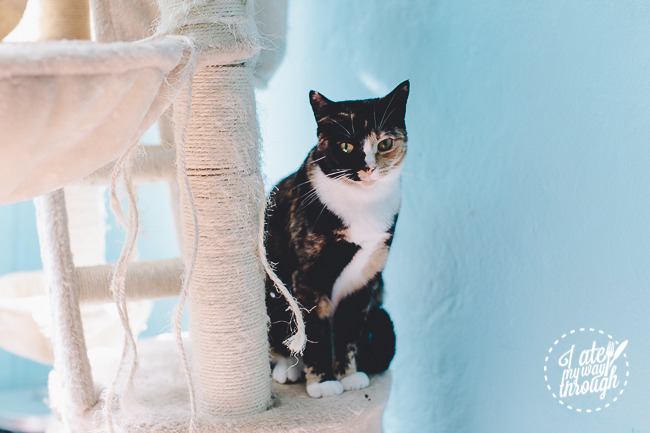 catmosphere, surry hills, cat, kitty, cat cafe, cafe