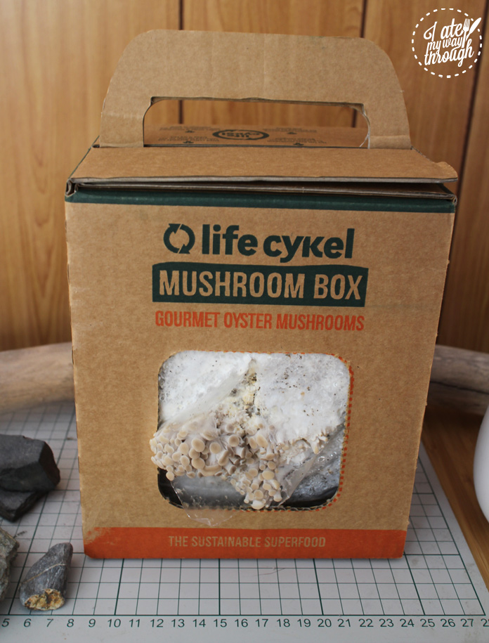 margaret_staffpicks_mushroombox2