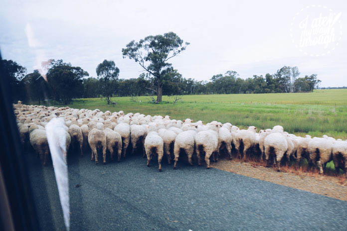 Traffic jams in the country