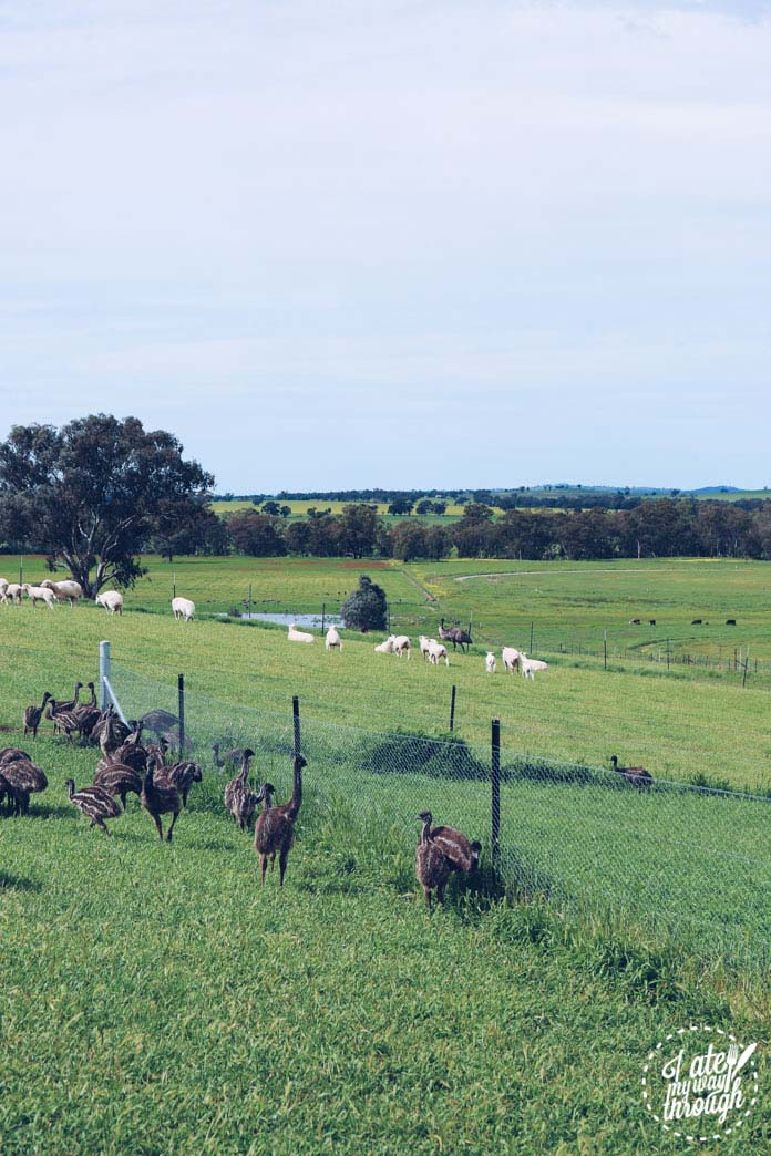 Baby emu farm - spotted during the Bundyi Cultural Tour